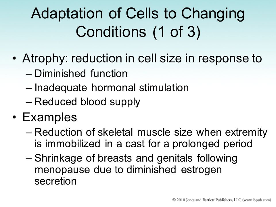 Adaptation of Cells to Changing Conditions (2 of 3) Hypertrophy: increase in cell size without increase in cell number –Muscles of a weight lifter –Heart of a person with high blood pressure Hyperplasia: increase in both cell size and number in response to increased demand –Glandular tissue of breasts during pregnancy in preparation for lactation –Enlargement of thyroid gland to increase output of hormones