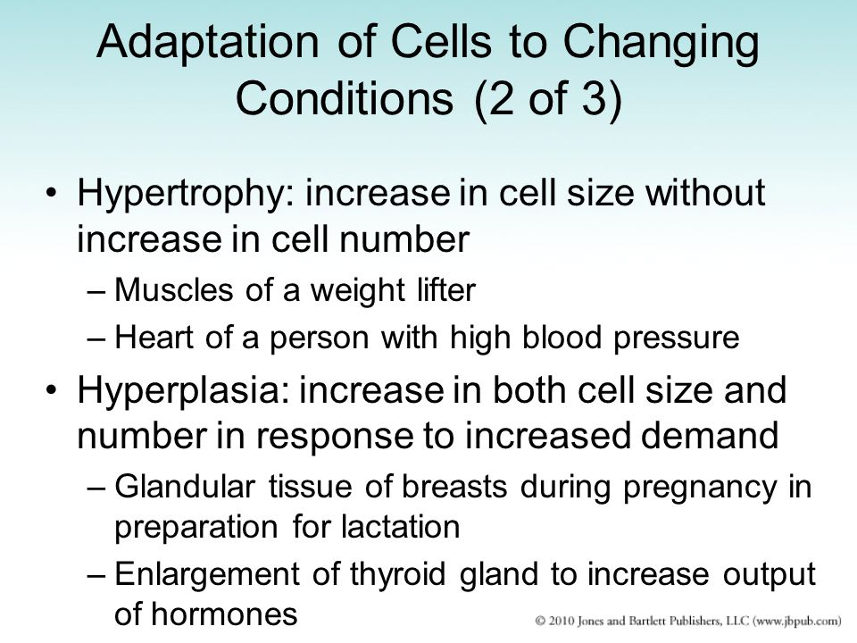 Adaptation of Cells to Changing Conditions (3 of 3) Metaplasia: change from one type of cell to another –Example: lining of a chronically inflamed bladder Dysplasia: cell development and maturation are disturbed and abnormal –Individual cells vary in size and shape –Example: chronic inflammation of epithelial cells of uterine cervix may progress to cervical epithelial dysplasia and neoplasia Increased enzyme synthesis –Adaptive response as in inactivating/detoxifying drugs or chemicals through SER enzymes