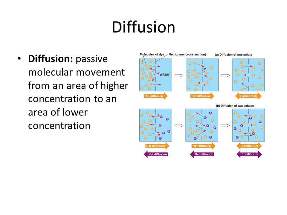 Diffusion Diffusion: passive molecular movement from an area of higher concentration to an area of lower concentration