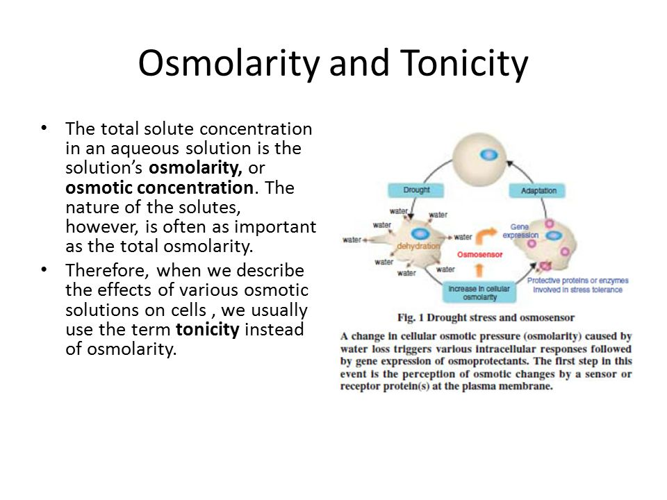 Osmolarity and Tonicity The total solute concentration in an aqueous solution is the solution's osmolarity, or osmotic concentration. The nature of th
