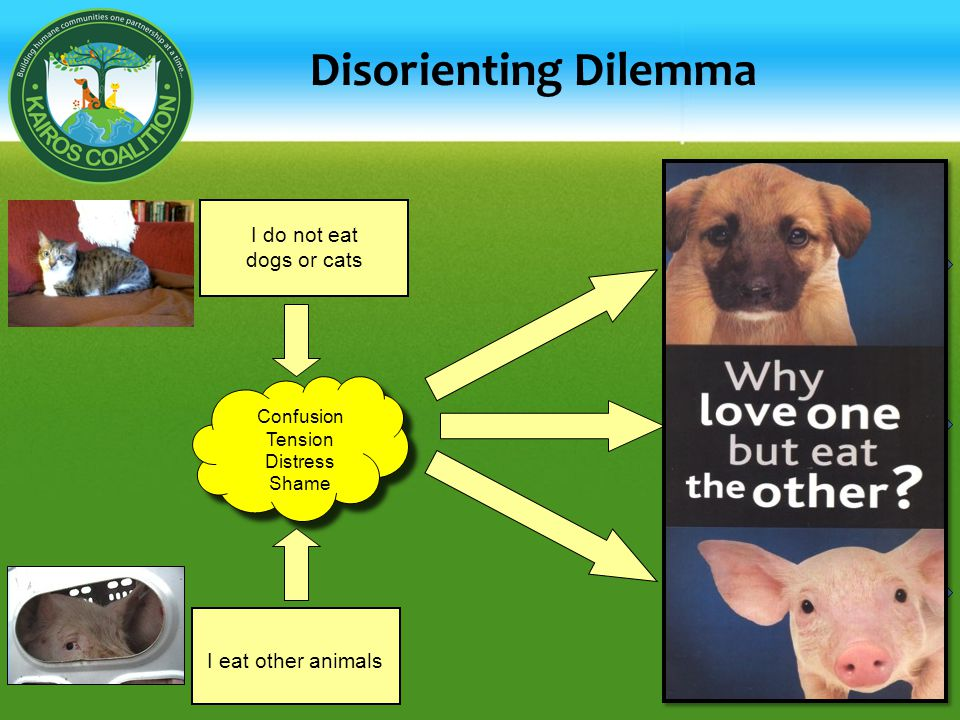 Disorienting Dilemma I eat other animals I do not eat dogs or cats Confusion Tension Distress Shame Dogs and Cats are no different than other kinds of