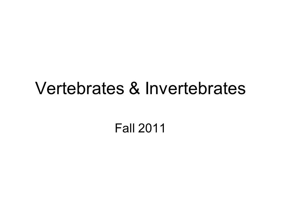 Vertebrates & Invertebrates Fall 2011