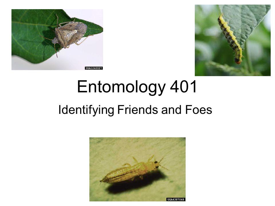 Hymenoptera : Braconidae