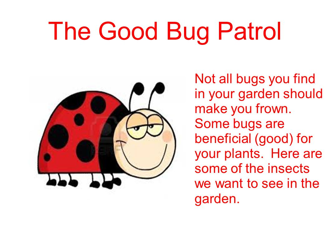 The Good Bug Patrol Not all bugs you find in your garden should make you frown. Some bugs are beneficial (good) for your plants. Here are some of the