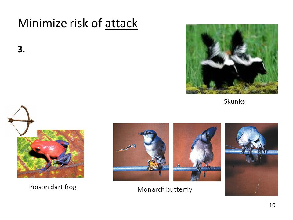 10 Minimize risk of attack 3. Poison dart frog Monarch butterfly Skunks