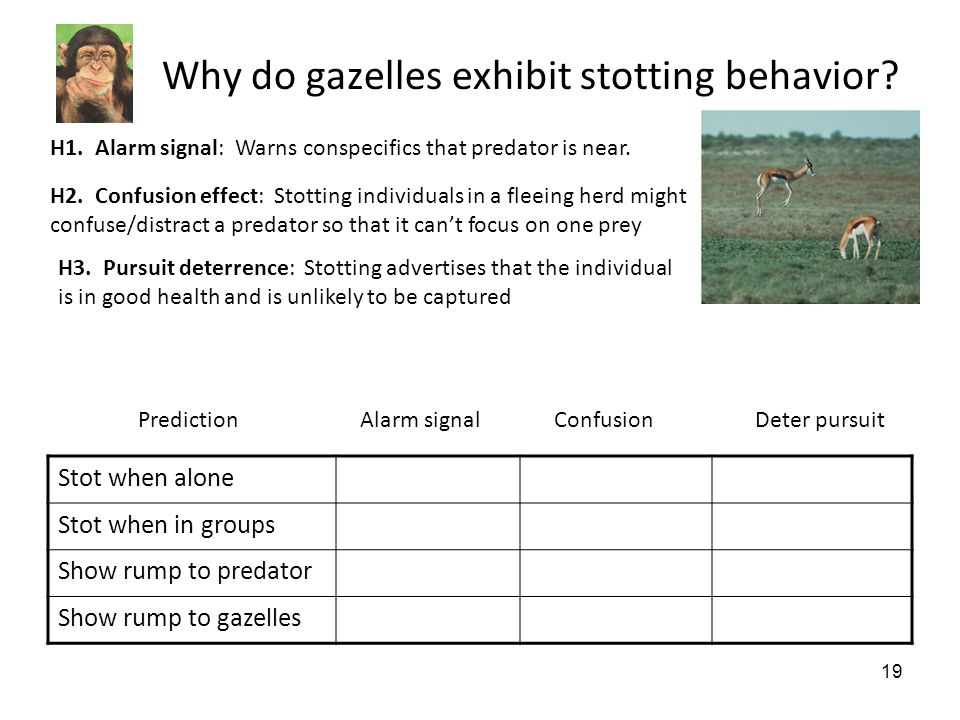 19 Why do gazelles exhibit stotting behavior. H1.