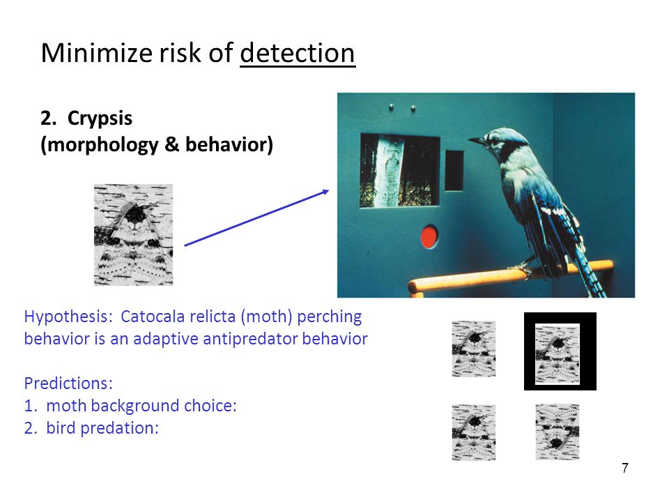 7 Minimize risk of detection 2.