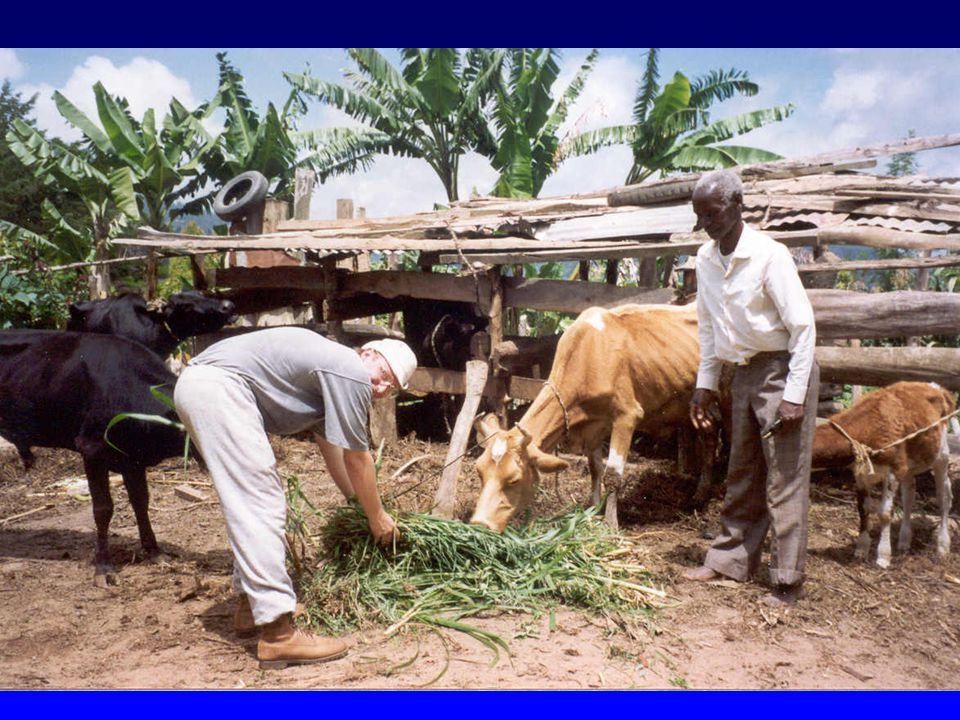 Negative Effects of African Trypanosomiasis (3) Other: –Presence of tsetse flies have affected the environment.