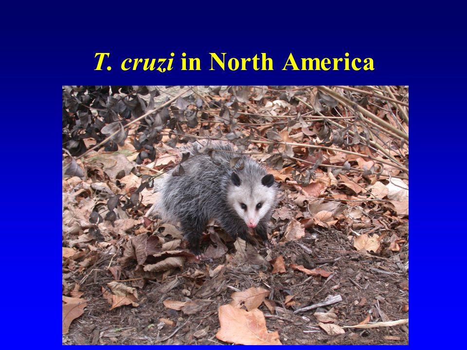 T. cruzi in North America