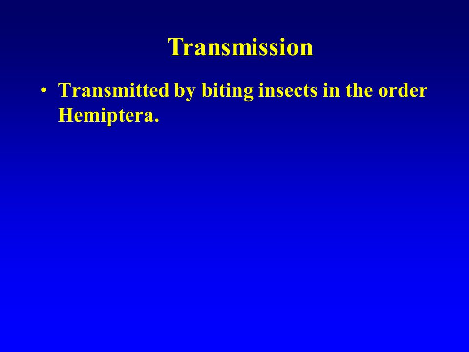 1)*Epimastigotes transmitted through bug feces.2)Trypomastigotes found in the peripheral blood.