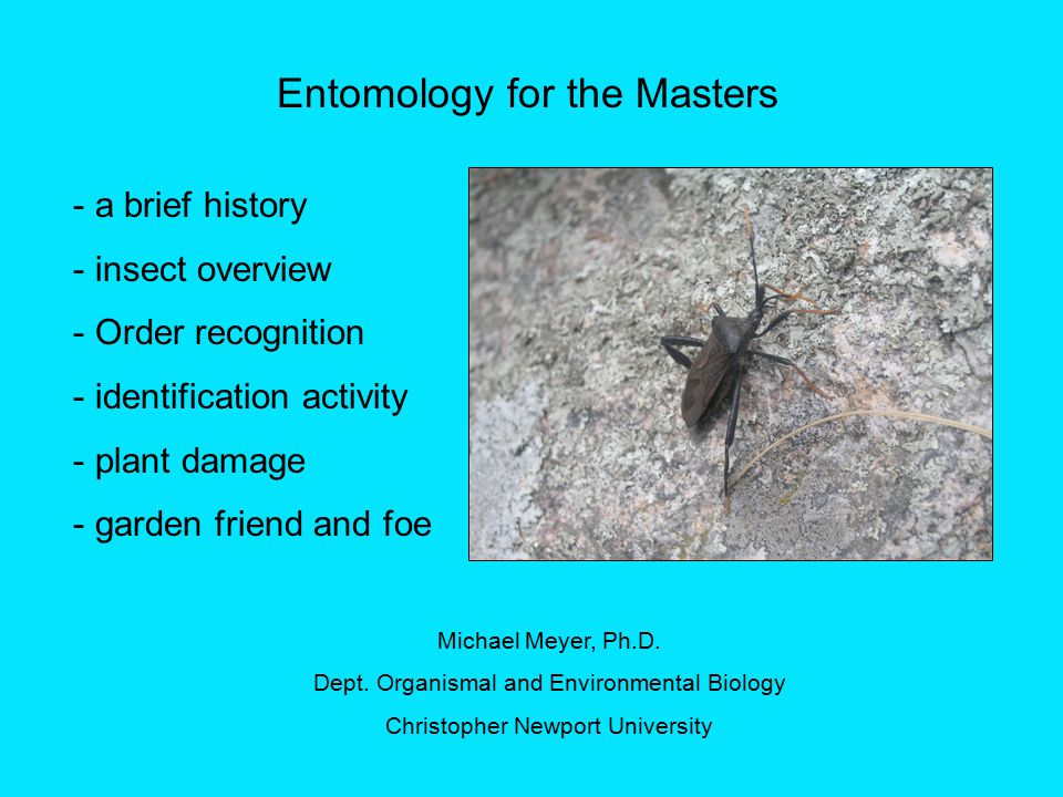 Entomology for the Masters - a brief history - insect overview - Order recognition - identification activity - plant damage - garden friend and foe Michael Meyer, Ph.D.