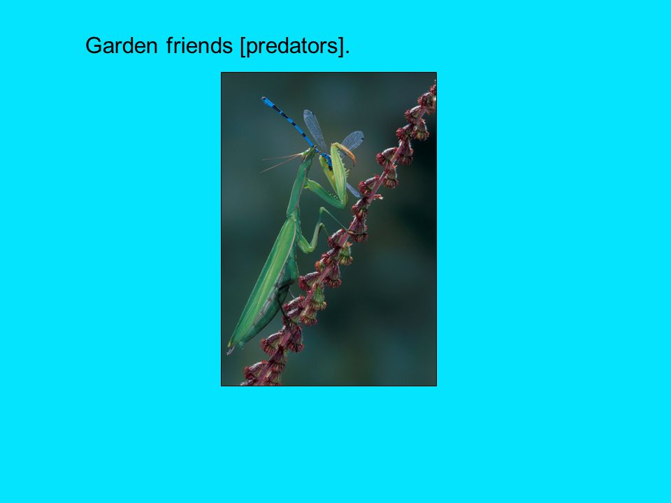 Garden friends [predators].