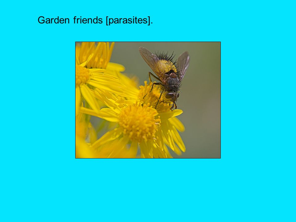 Garden friends [parasites].