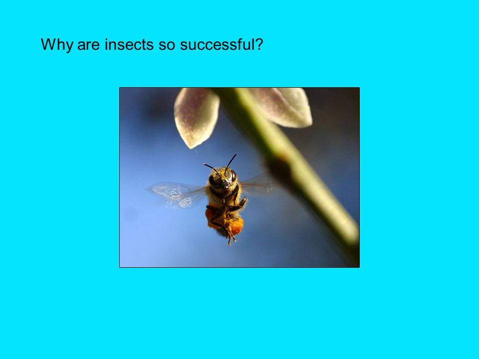 Why are insects so successful?