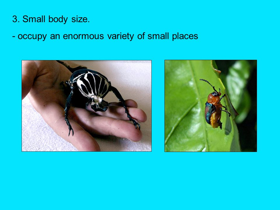 3. Small body size. - occupy an enormous variety of small places