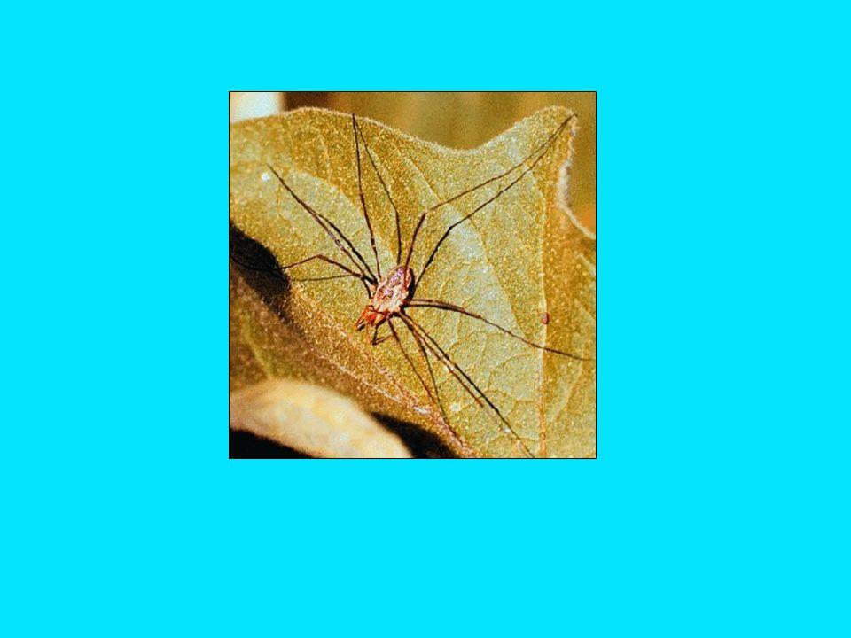A. Caterpillars [Lepidoptera]