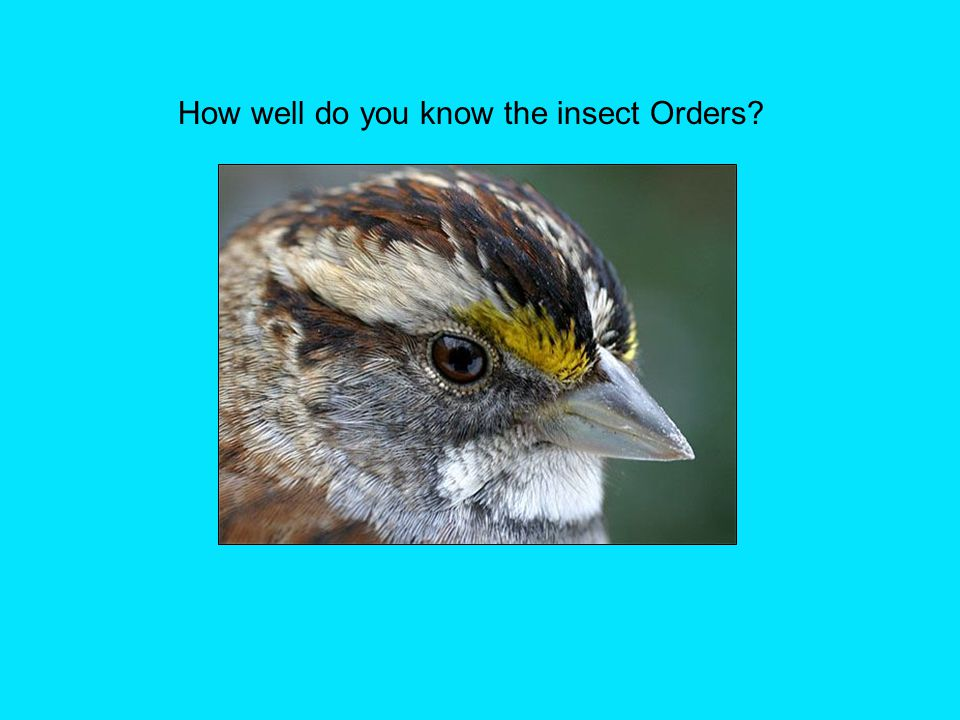 How well do you know the insect Orders?