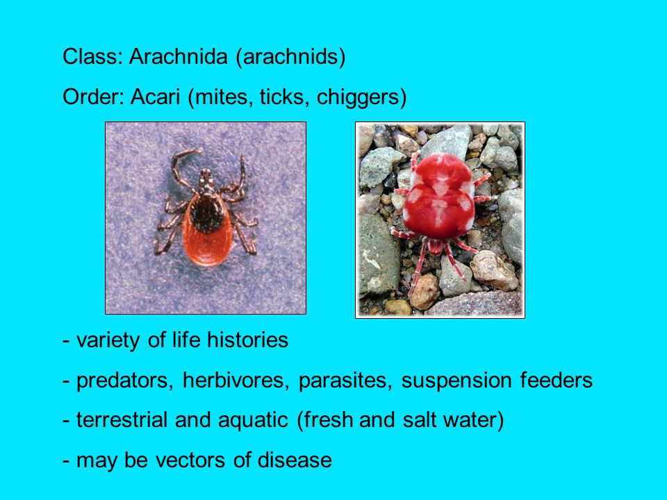 Garden friends [predators].