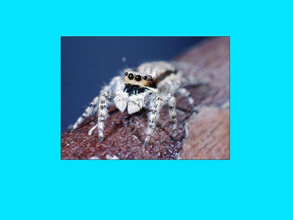 Ants [Hymenoptera: Formicidae]