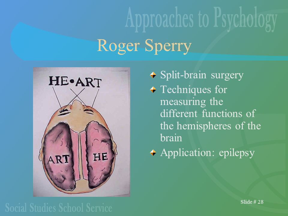 Slide # 28 Roger Sperry Split-brain surgery Techniques for measuring the different functions of the hemispheres of the brain Application: epilepsy