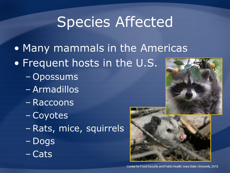 Species Affected Many mammals in the Americas Frequent hosts in the U.S.