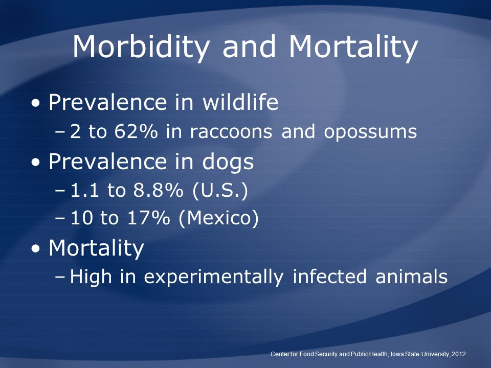 Morbidity and Mortality Prevalence in wildlife –2 to 62% in raccoons and opossums Prevalence in dogs –1.1 to 8.8% (U.S.) –10 to 17% (Mexico) Mortality –High in experimentally infected animals Center for Food Security and Public Health, Iowa State University, 2012