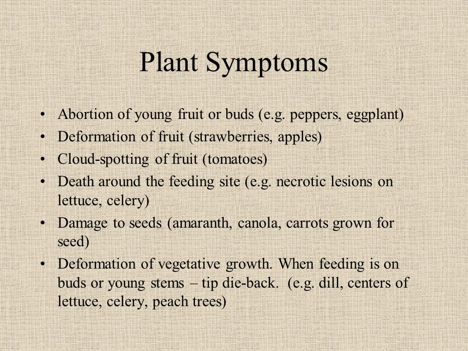 Plant Symptoms Abortion of young fruit or buds (e.g.