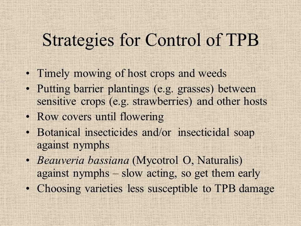 Strategies for Control of TPB Timely mowing of host crops and weeds Putting barrier plantings (e.g.