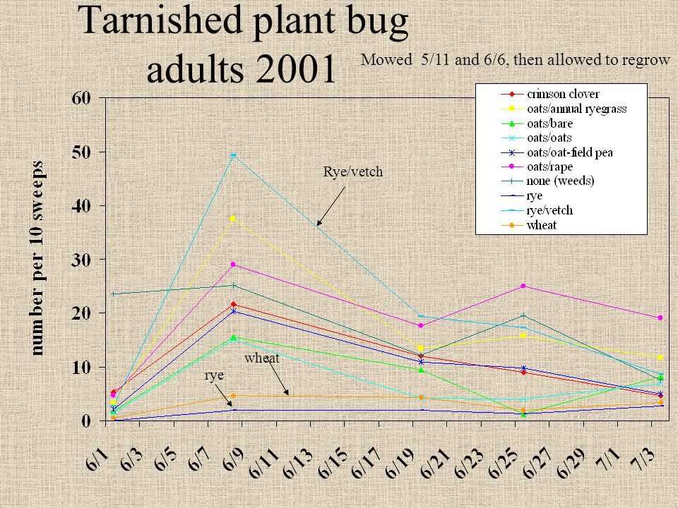 Tarnished plant bug adults 2001 Mowed 5/11 and 6/6, then allowed to regrow Rye/vetch rye wheat