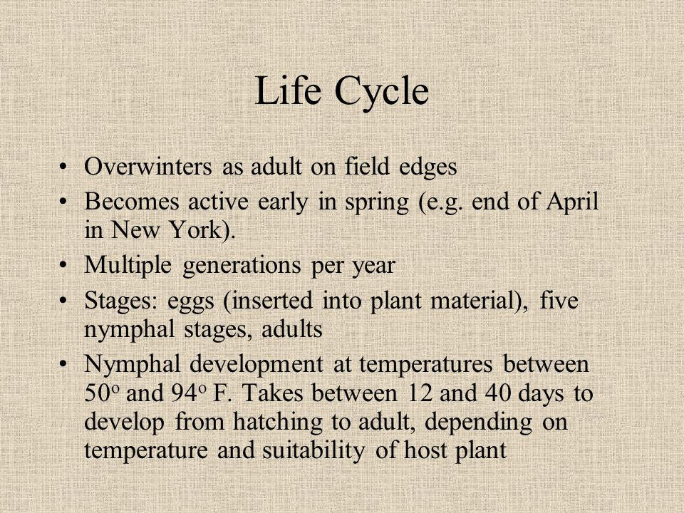 Life Cycle Overwinters as adult on field edges Becomes active early in spring (e.g.