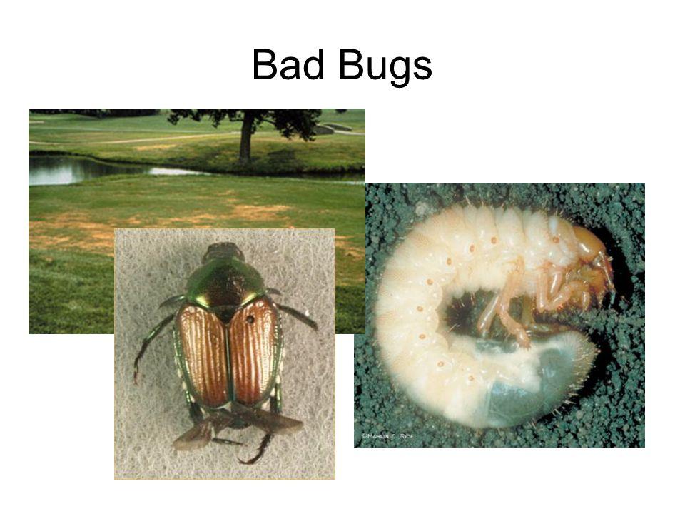 Bad Bugs