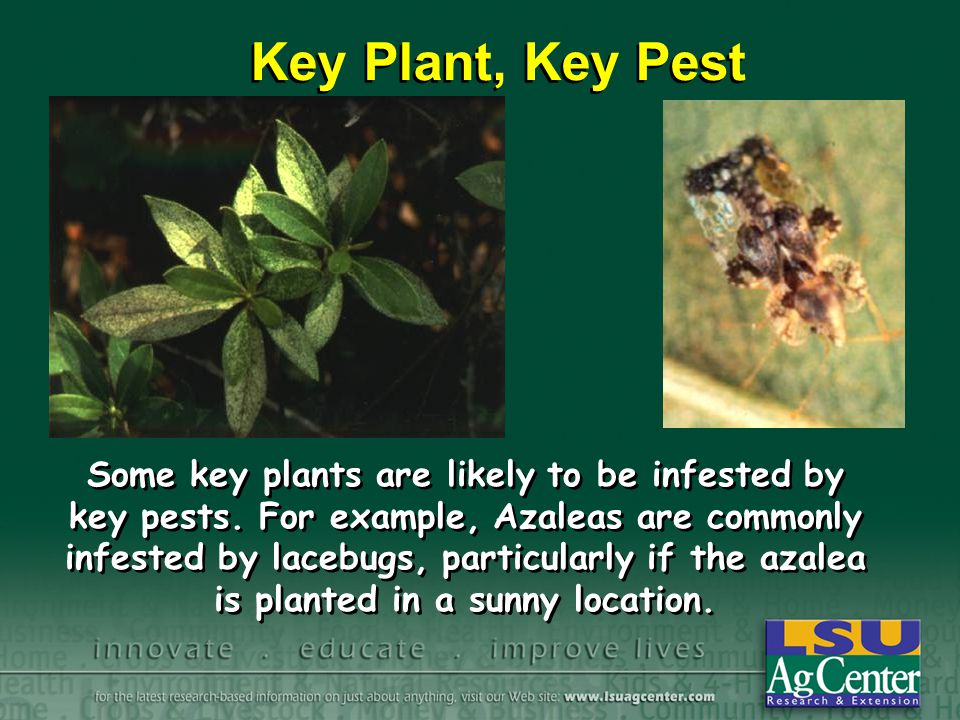 Some key plants are likely to be infested by key pests.