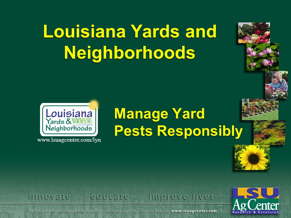 Louisiana Yards and Neighborhoods Manage Yard Pests Responsibly www.lsuagcenter.com/lyn