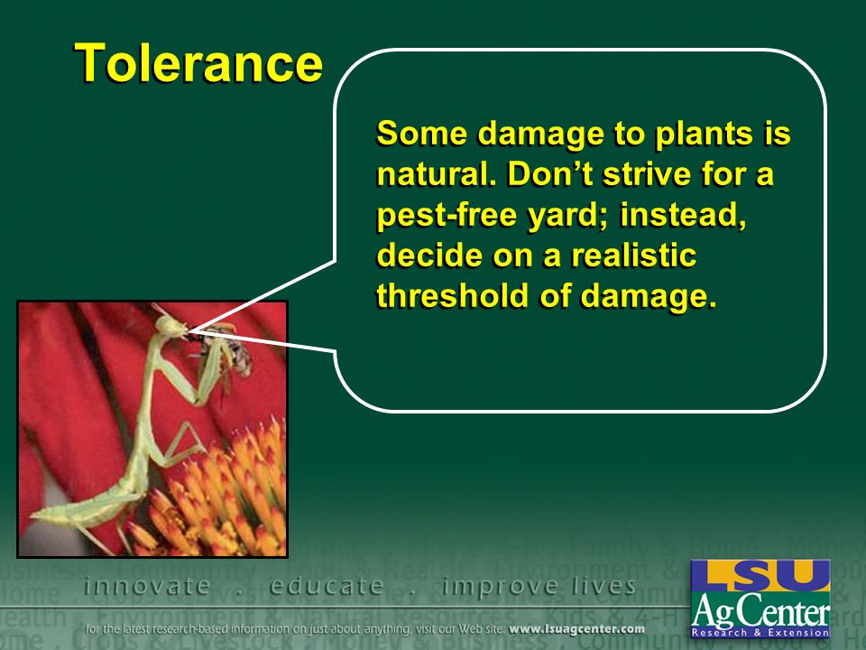 Tolerance Some damage to plants is natural.