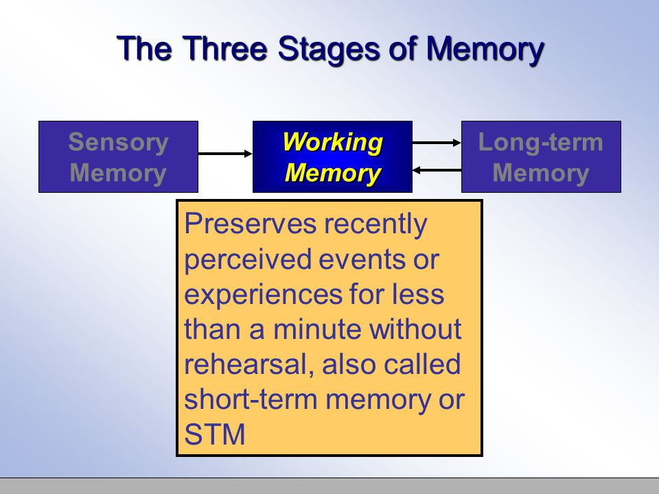 The Three Stages of Memory Sensory Memory Working Memory Long-term Memory Preserves recently perceived events or experiences for less than a minute without rehearsal, also called short-term memory or STM
