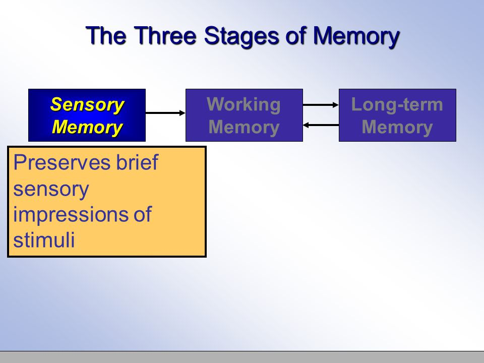 The First Stage: Sensory Memory The actual capacity of sensory memory can be twelve or more items All but three or four items disappear before they can enter consciousness There is a separate sensory register for each sense