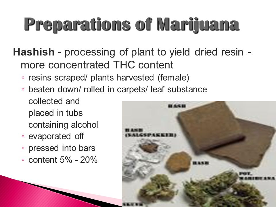 Hashish - processing of plant to yield dried resin - more concentrated THC content ◦ resins scraped/ plants harvested (female) ◦ beaten down/ rolled in carpets/ leaf substance collected and placed in tubs containing alcohol ◦ evaporated off ◦ pressed into bars ◦ content 5% - 20%