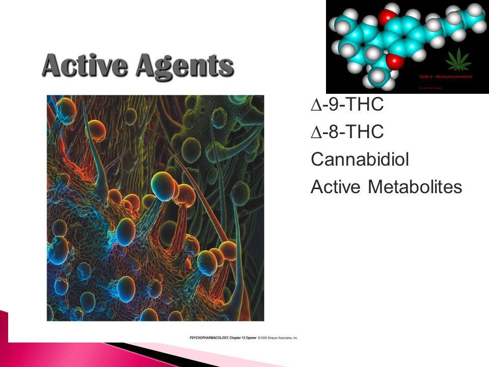  -9-THC  -8-THC Cannabidiol Active Metabolites