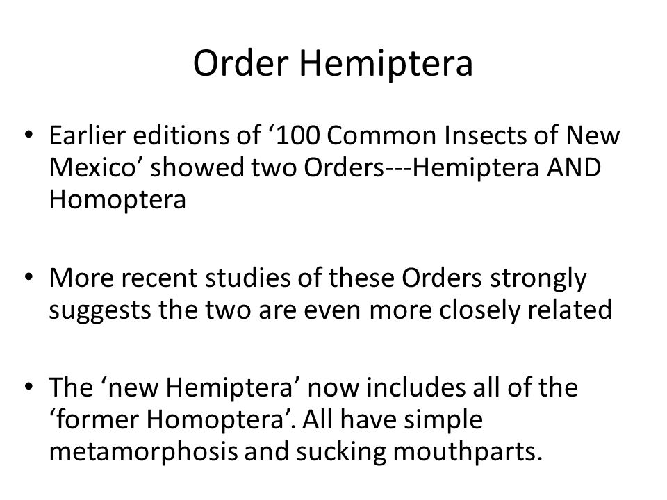 Order Hemiptera Earlier editions of '100 Common Insects of New Mexico' showed two Orders---Hemiptera AND Homoptera More recent studies of these Orders strongly suggests the two are even more closely related The 'new Hemiptera' now includes all of the 'former Homoptera'.