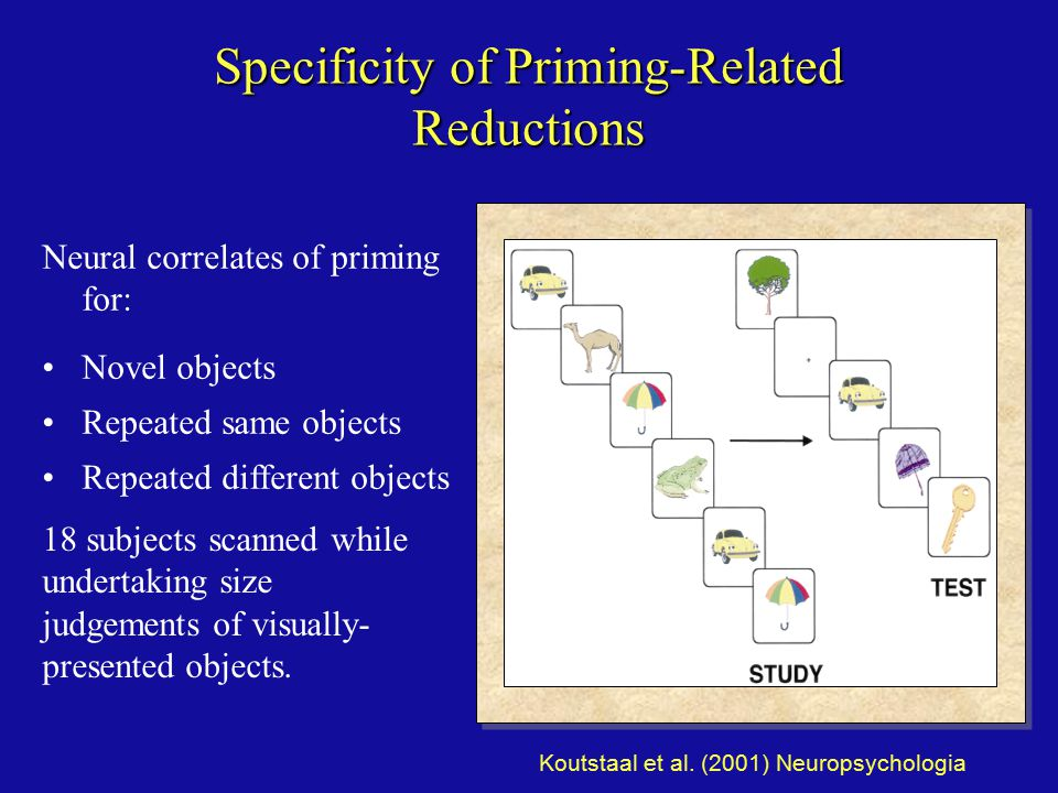 Specificity of Priming-Related Reductions Neural correlates of priming for: Novel objects Repeated same objects Repeated different objects 18 subjects