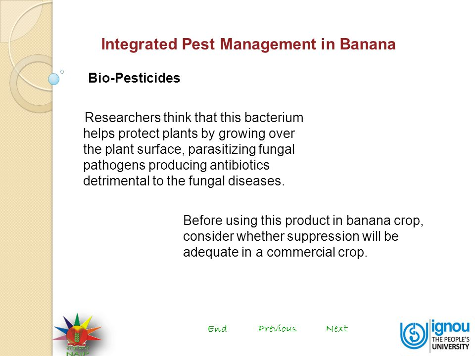 Integrated Pest Management in Banana Bio-Pesticides Researchers think that this bacterium helps protect plants by growing over the plant surface, parasitizing fungal pathogens producing antibiotics detrimental to the fungal diseases.