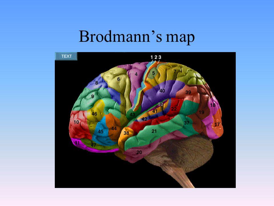 Brodmann's map