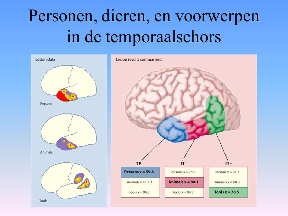 Personen, dieren, en voorwerpen in de temporaalschors