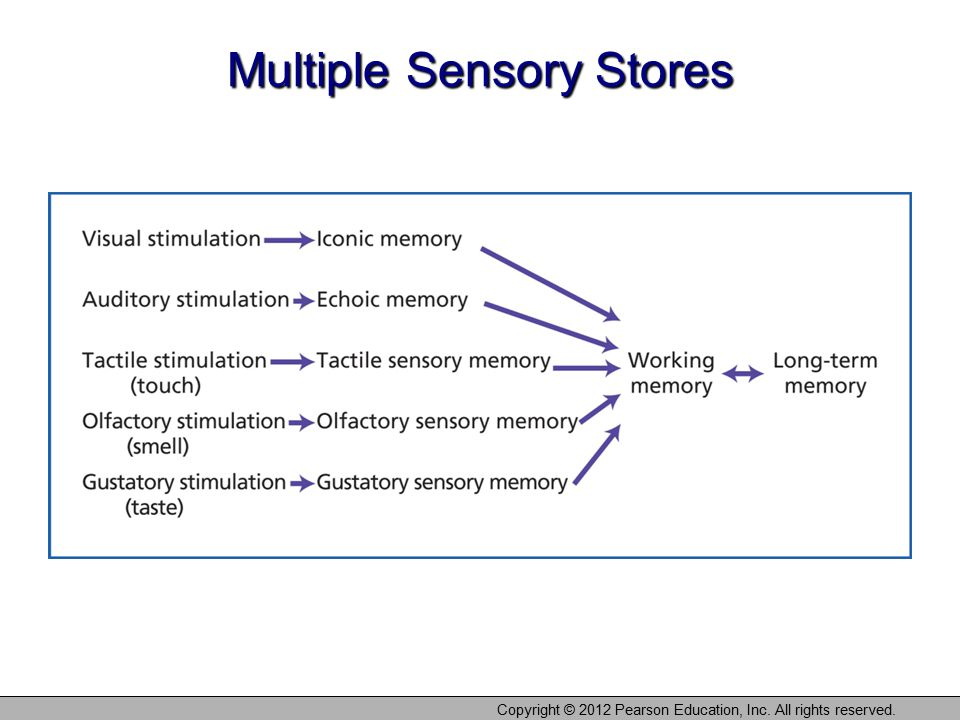 Multiple Sensory Stores Copyright © 2012 Pearson Education, Inc. All rights reserved.
