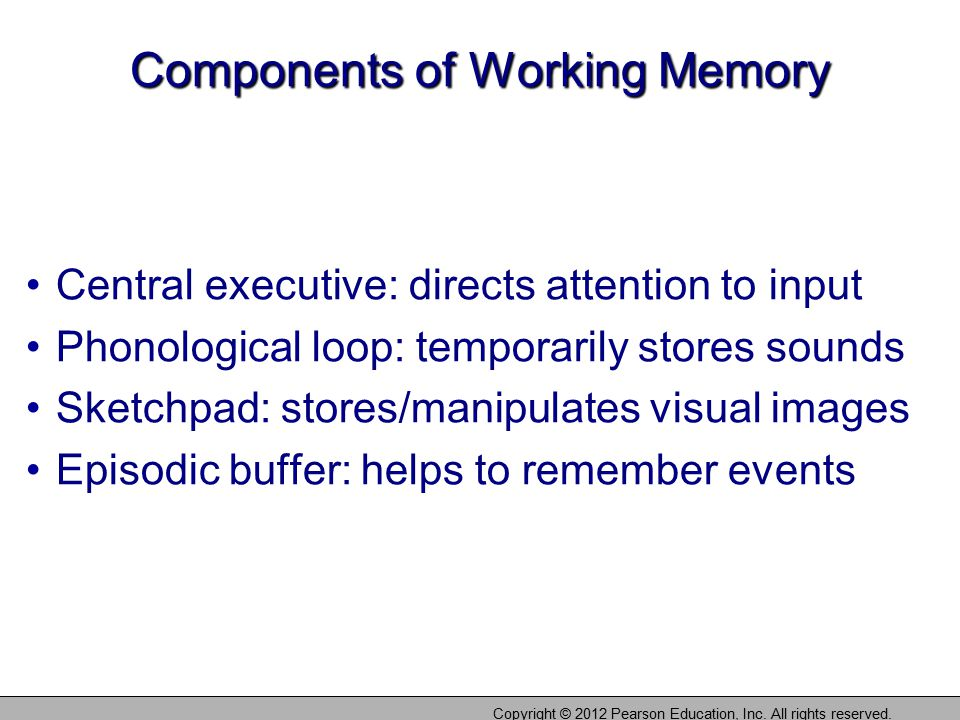 Components of Working Memory Central executive: directs attention to input Phonological loop: temporarily stores sounds Sketchpad: stores/manipulates