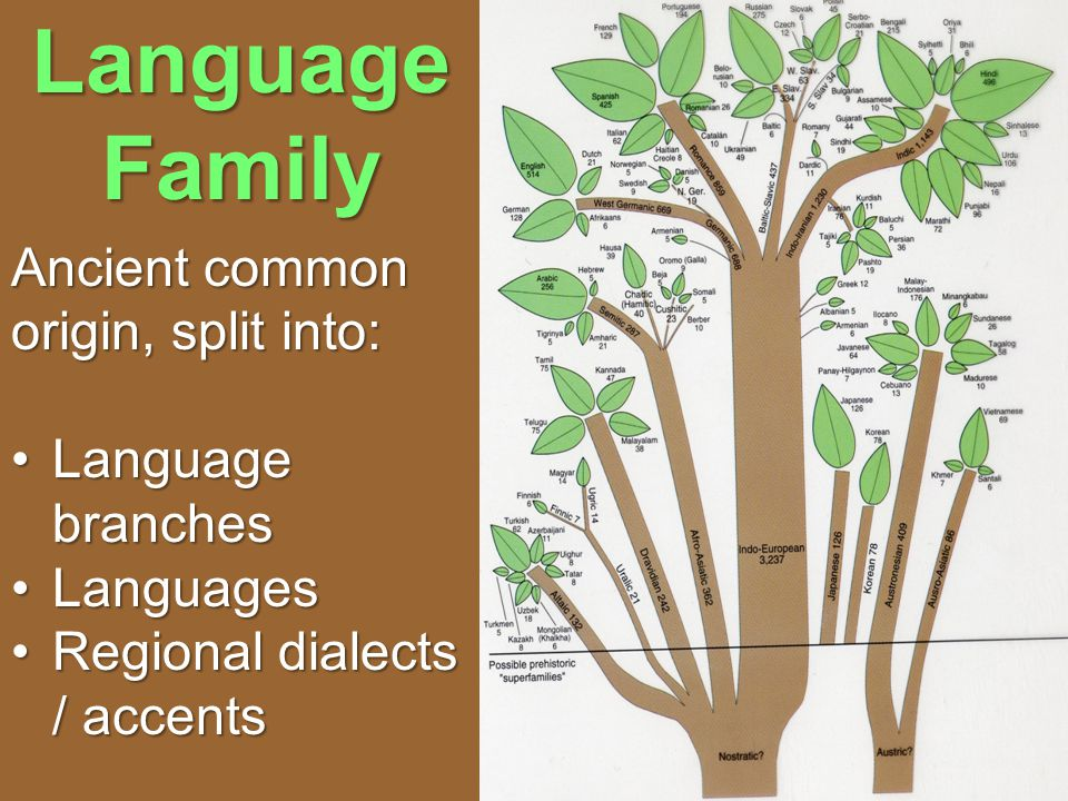 Language Family Ancient common origin, split into: Language branchesLanguage branches LanguagesLanguages Regional dialects / accentsRegional dialects