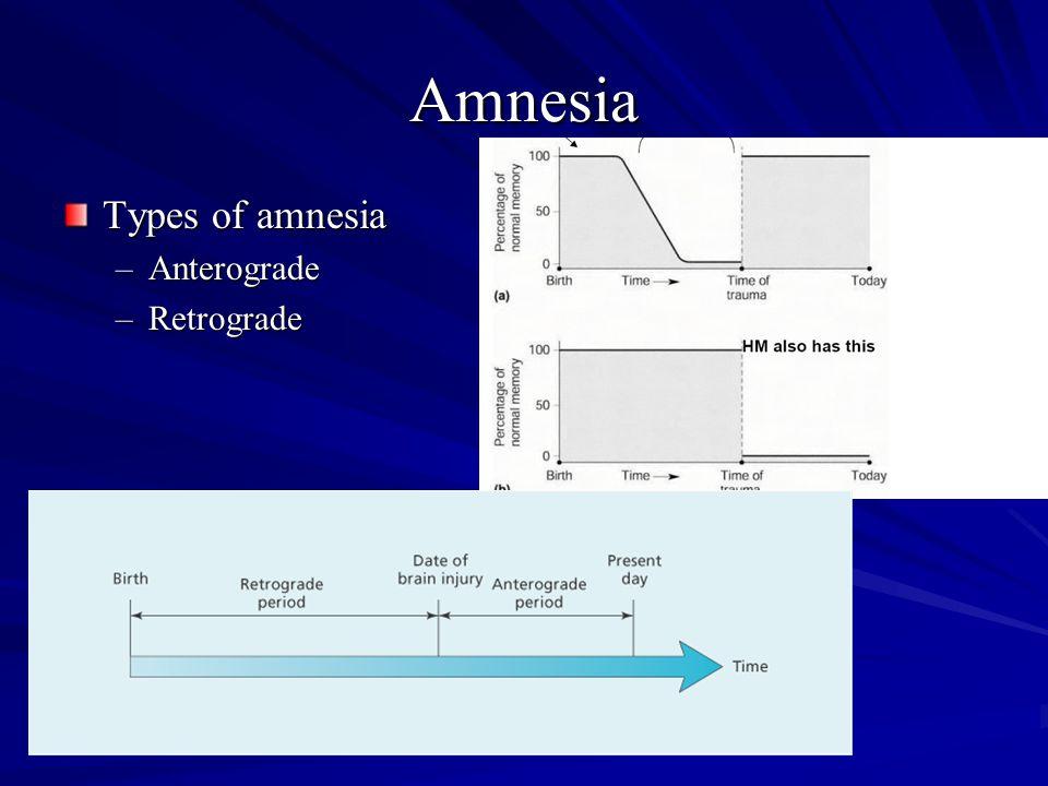 Amnesia Types of amnesia –Anterograde –Retrograde