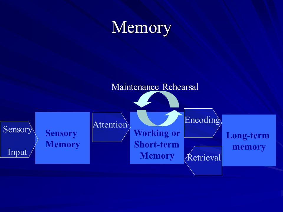 Memory Long-term memory Working or Short-term Memory Sensory Input Sensory Memory Attention Encoding Retrieval Maintenance Rehearsal