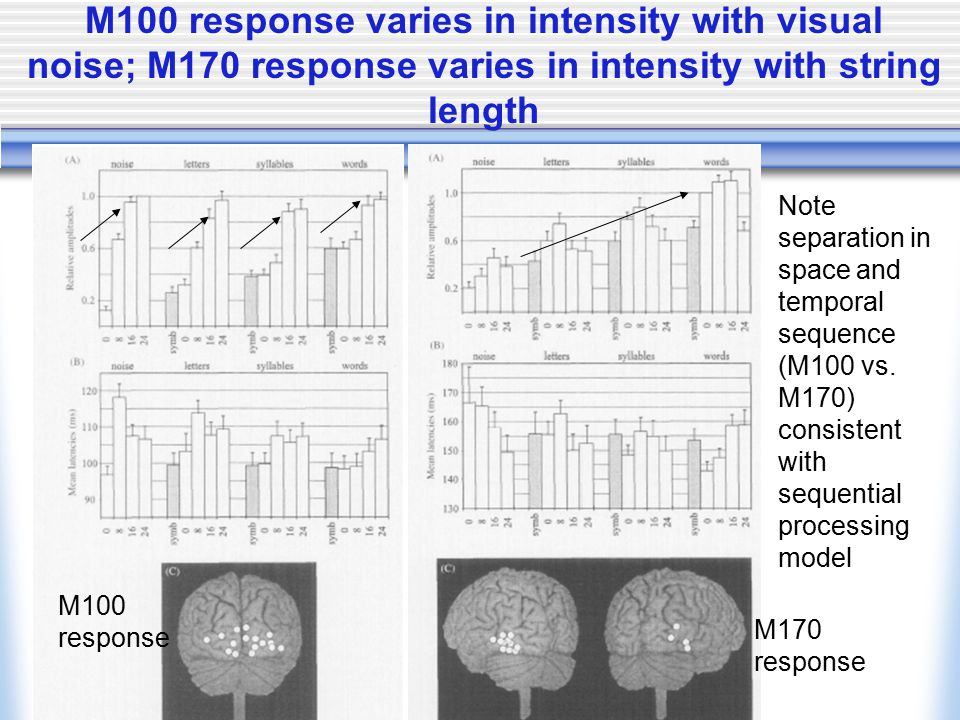 M100 response varies in intensity with visual noise; M170 response varies in intensity with string length M100 response M170 response Note separation in space and temporal sequence (M100 vs.