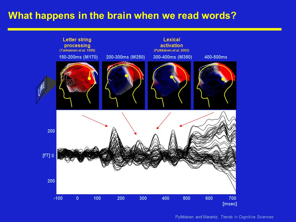 What happens in the brain when we read words.